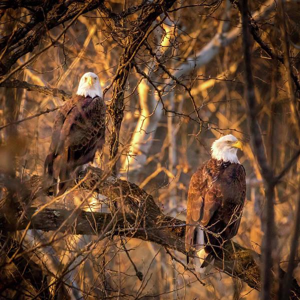 Photograph - Eagles by Allin Sorenson