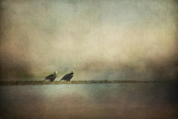 Oyster Bar Wall Art - Photograph - Eagles At The Oyster Bar by Jai Johnson