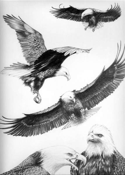 Bengal Tiger Drawing - Eagles Gathering by Bob Patterson