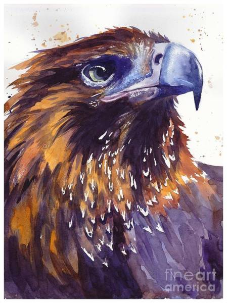 Blue Feather Wall Art - Painting - Eagle's Head by Suzann's Art