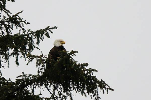 Photograph - Eagle's Hideout  by Christy Pooschke