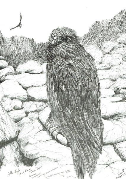 Hawk Drawing - Eagles Of The Highlands by Vincent Alexander Booth