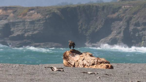 Photograph - Eagle's Perch  by Christy Pooschke