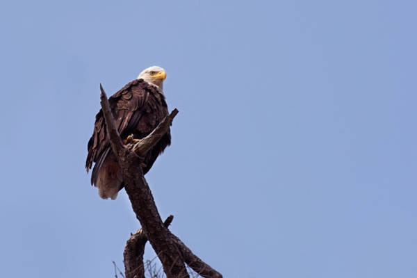 Photograph - Eagle's Perch by David Lunde