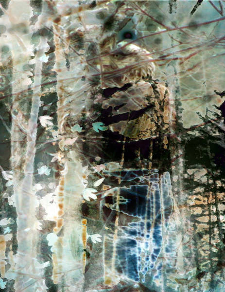 Wall Art - Photograph - Eaglet In Birch by Nancy TeWinkel Lauren