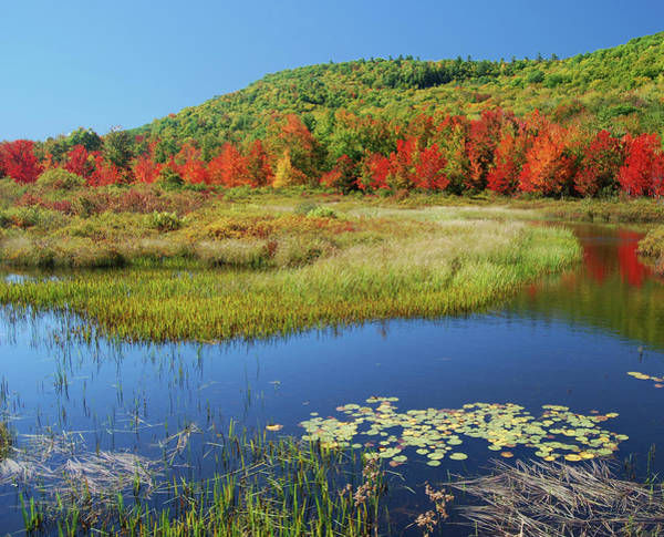 Stoney Brook Photograph - Early Autumn Color by John Kessler