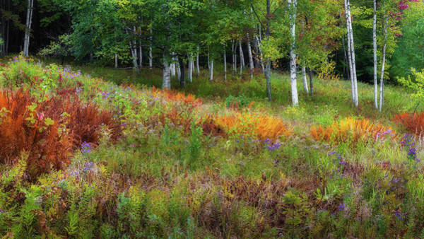 Photograph - Early Autumn Colors by Bill Wakeley