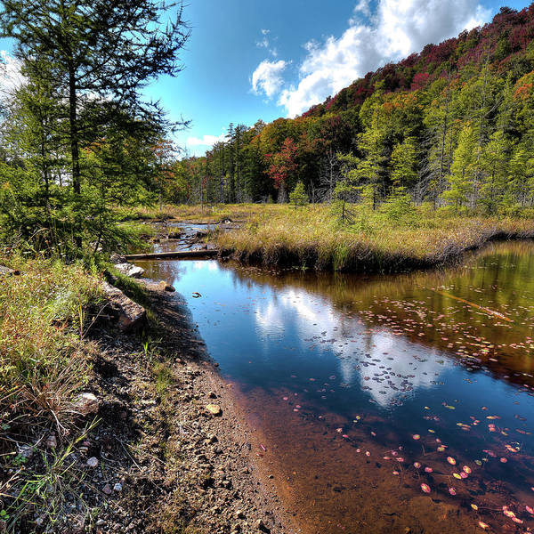 Photograph - Early Autumn On The Pond by David Patterson