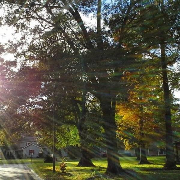 Photograph - Early Autumn Sunlight, Last Year! by Cheray Dillon