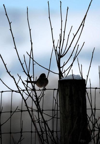 Snow Fence Digital Art - Early Bird by Holly Ethan