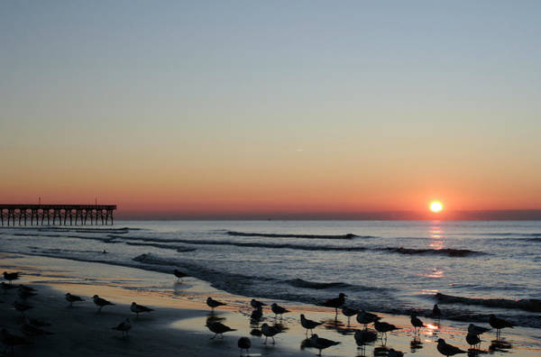 Photograph - Early Birds by Ree Reid