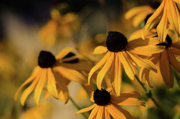 Photograph - Early Evening Flowers by Miguel Winterpacht