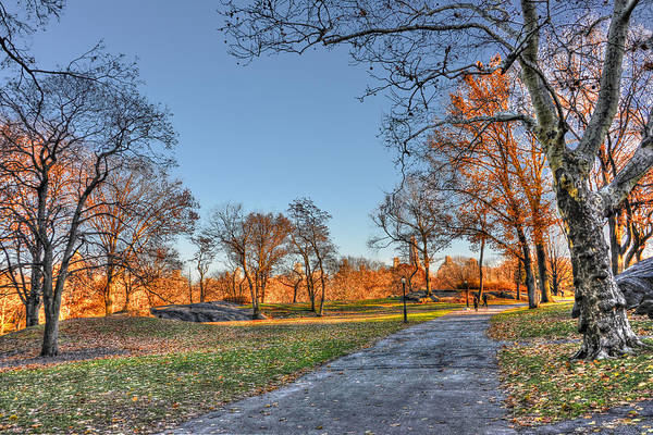Wall Art - Photograph - Early Evening In Central Park  by Randy Aveille
