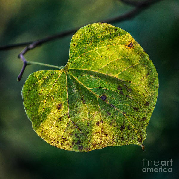 Photograph - Early Fall by Michael Arend