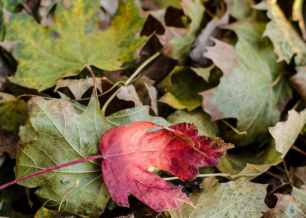 Photograph - Early Fall by Tom Potter