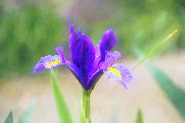 Wall Art - Digital Art - Early Iris by Terry Davis