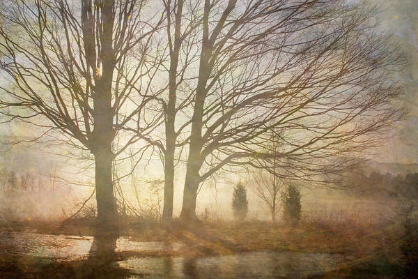 Photograph - Early Morning Fog by Betty  Pauwels