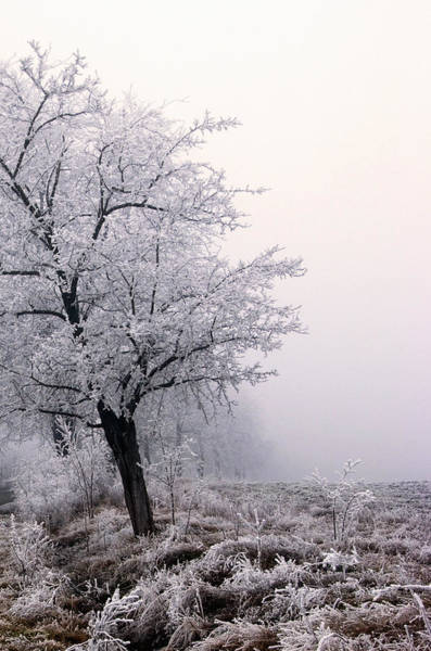 Photograph - Early Morning Frost  by Cliff Norton