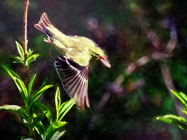 Photograph - Early Morning Goldfinch by Bellesouth Studio