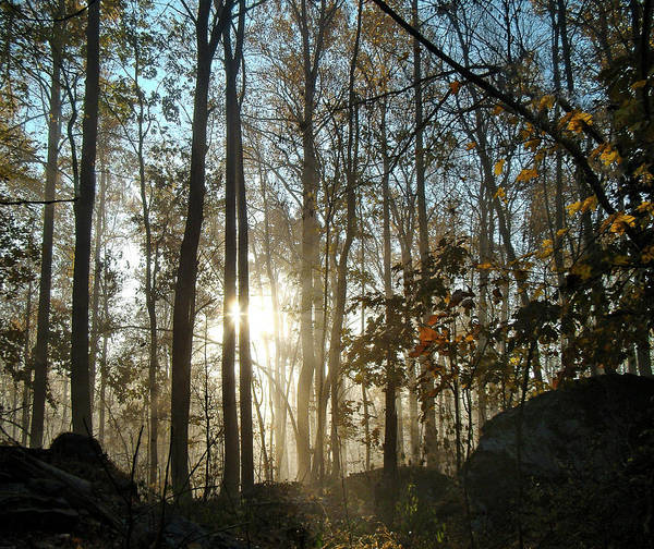 Photograph - Early Morning In The Autumn Woods by Mother Nature