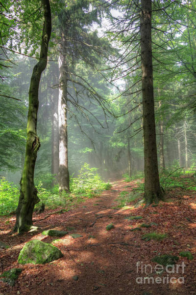 Wall Art - Photograph - Early Morning In The Forest by Michal Boubin