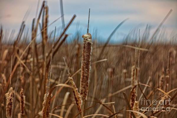 Wall Art - Photograph - Early Morning In The Marsh by Mary Machare