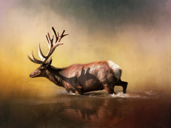 Antlers Wall Art - Photograph - Early Morning Swim by David and Carol Kelly