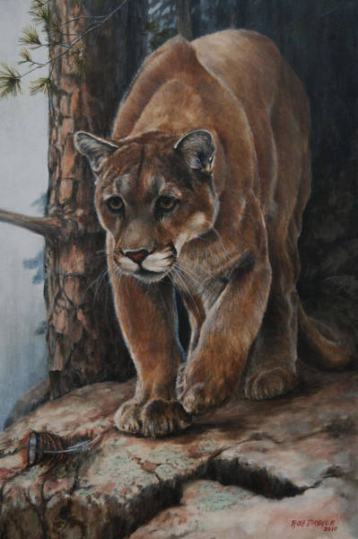 Mountain Lion Painting - Early Morning Turkey Hunt by Dreyer Wildlife Print Collections