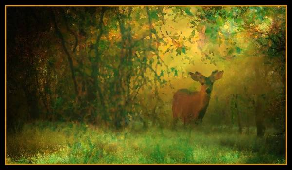 Photograph - Early Morning Visitor by Sherri Meyer
