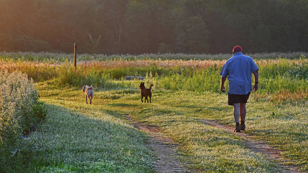 Photograph - Early Morning Walk With Friends by Ken Stampfer