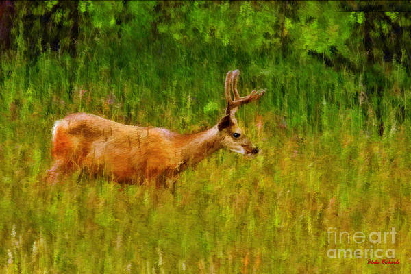 Photograph - Early Morning Young Buck by Blake Richards