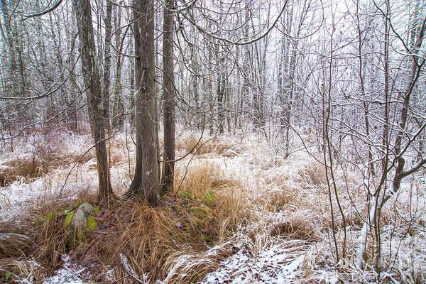 Photograph - Early Snow by Alana Ranney