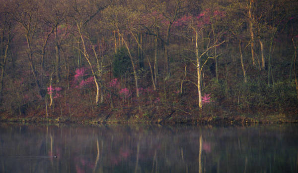 Photograph - Early Spring Lake Shore by Jeff Phillippi
