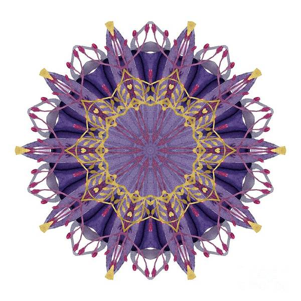 Wall Art - Digital Art - Early Spring Mandala by Mary Machare