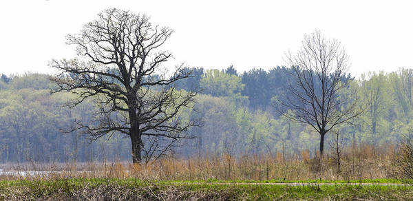 Photograph - Early Spring Silhouettes  by Lynn Hansen