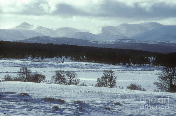 Photograph - Early Winter - Cairngorm Mountains by Phil Banks