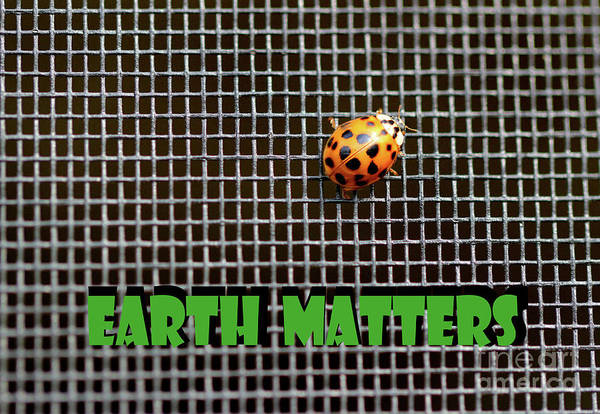 Photograph - Earth Matters Ladybug by Karen Adams