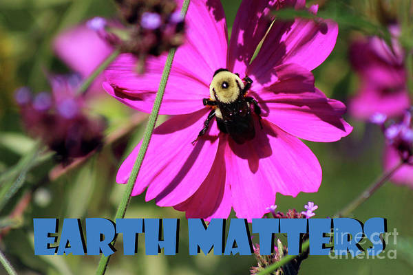 Photograph - Earth Matters To Bees by Karen Adams