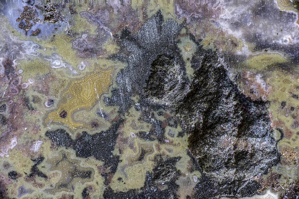 Photograph - Earth Portrait 001-168 by David Waldrop