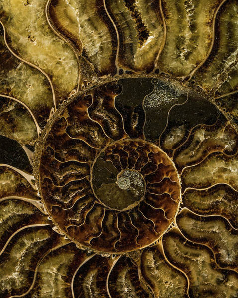 Wall Art - Photograph - Earth Treasures - Dark And Light Brown Fossil by Jaroslaw Blaminsky