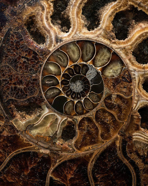 Wall Art - Photograph - Earth Treasures - Fossil In Brown And Beige Tones by Jaroslaw Blaminsky
