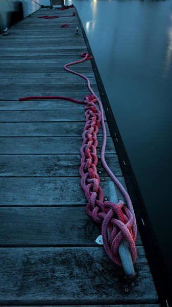 Robinson Photograph - Easily Untangled by Nicole Robinson