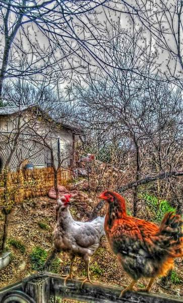 Photograph - East Austin Livin by Ismael Cavazos