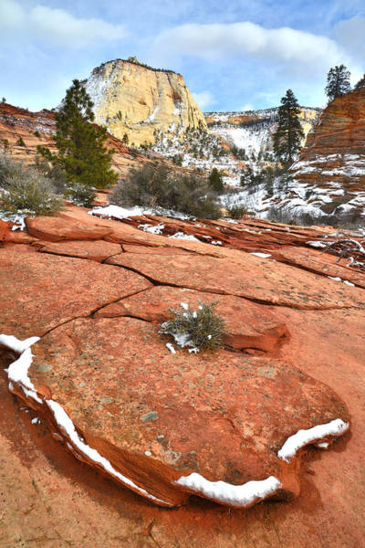 Photograph - East Canyon Zion by Ray Mathis