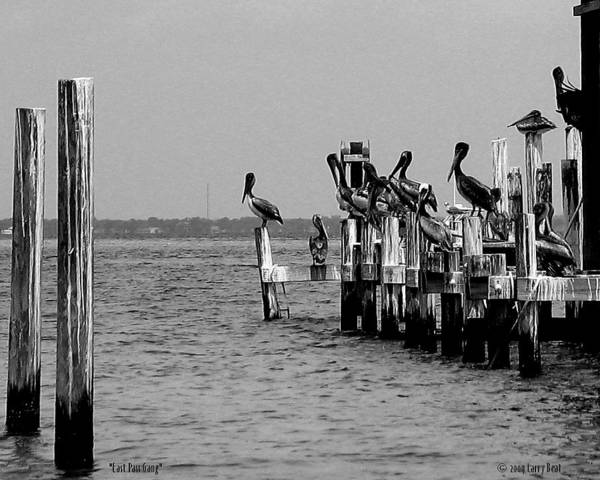 Choctawhatchee Bay Photograph - East Pass Gang - Gray by Larry Beat