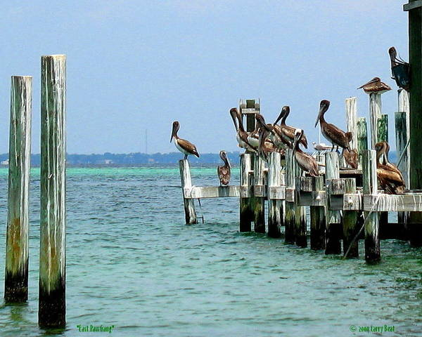 Choctawhatchee Bay Photograph - East Pass Gang by Larry Beat