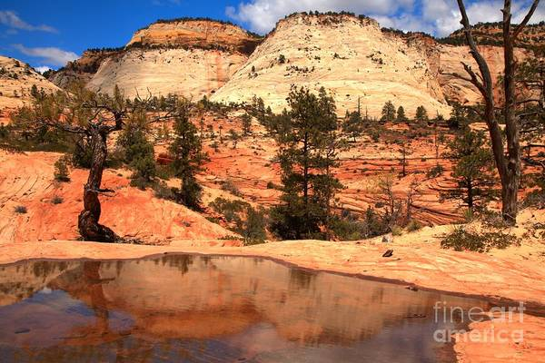 Photograph - East Zion National Park Reflections by Adam Jewell