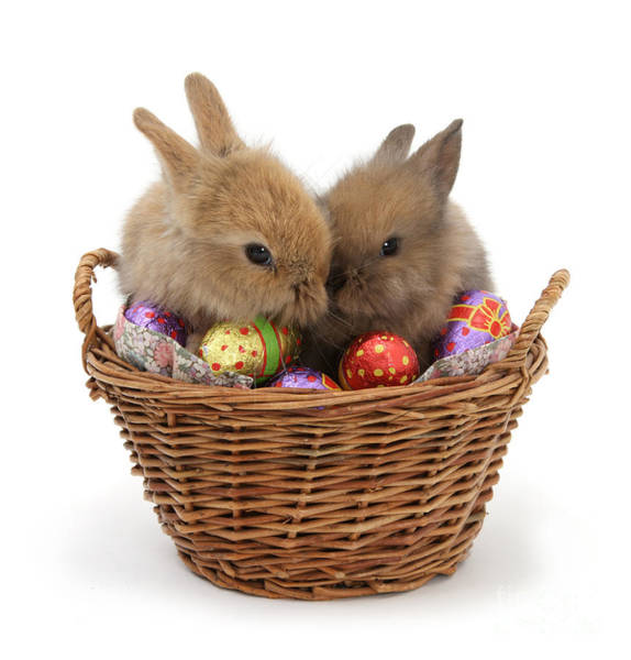 Photograph - Easter Bunny Basket by Warren Photographic