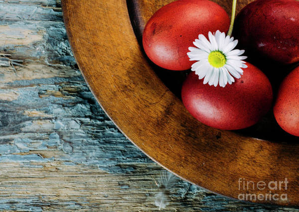 Wall Art - Photograph - Easter Eggs And Daisy Flower by Jelena Jovanovic