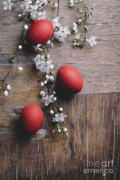 Wall Art - Photograph - Easter Eggs And Spring Blossom by Jelena Jovanovic